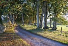 Kolorowy Bukowy drzewnego gospodarstwa rolnego pasa ruchu sposób Zdjęcia Stock