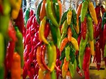 Kolorowy Chili pieprzy wieszać Obraz Stock