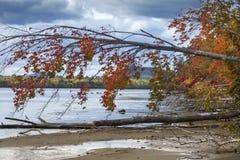 Kolorowy czerwony klon wiesza nad lakewater w północno-zachodni Maine Obrazy Stock