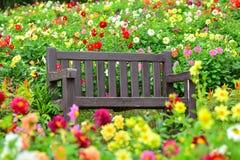 Kolorowy dalia ogród Fotografia Royalty Free