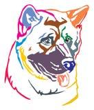 Kolorowy dekoracyjny portret Psi amerykanina Akita wektoru illust royalty ilustracja