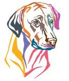 Kolorowy dekoracyjny portret Psi Rhodesian Ridgeback wektor ja ilustracja wektor
