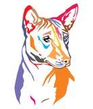 Kolorowy dekoracyjny portret Psia Basenji wektoru ilustracja ilustracja wektor