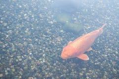 Kolorowy dekoracyjny ryba pławik w sztucznym stawie obrazy stock
