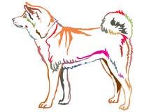 Kolorowy dekoracyjny trwanie portret Akita Inu Fotografia Stock