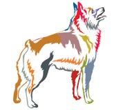 Kolorowy dekoracyjny trwanie portret Schipperke wektoru illus ilustracji