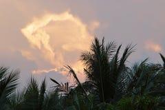 Kolorowy dramatyczny niebo na mrocznym czasie przeciw kokosowym drzewkom palmowym na przedpolu Fotografia Stock