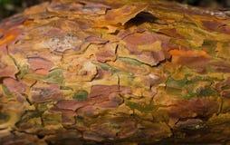 Kolorowy drzewnej barkentyny zakończenie Zdjęcie Stock