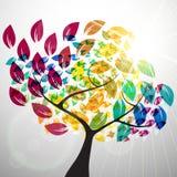 kolorowy drzewo Zdjęcie Stock