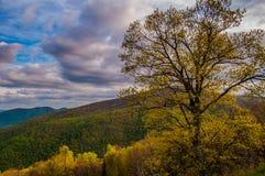 Kolorowy drzewo na linii horyzontu przejażdżce w Shenandoah parku narodowym Obrazy Stock