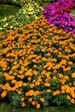 kolorowy flowerbed Zdjęcie Stock