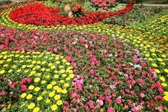 Kolorowy flowerbed Obraz Royalty Free