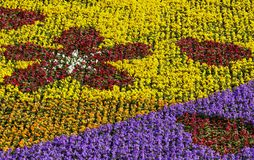 kolorowy flowerbed Obraz Stock