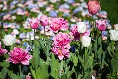 Kolorowy flowerbed w świetle słonecznym Zdjęcia Stock