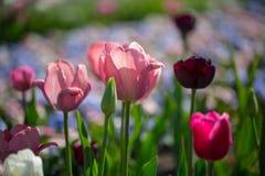 Kolorowy flowerbed w świetle słonecznym Obrazy Royalty Free