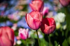 Kolorowy flowerbed w świetle słonecznym Fotografia Royalty Free