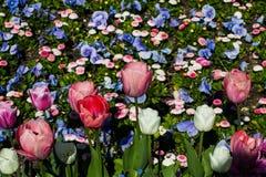 Kolorowy flowerbed w świetle słonecznym Fotografia Stock