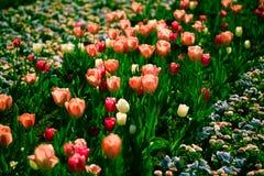 Kolorowy flowerbed w świetle słonecznym Zdjęcia Royalty Free