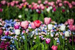 Kolorowy flowerbed w świetle słonecznym Obrazy Stock