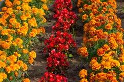 Kolorowy flowerbed w ogródzie w wiośnie Zdjęcia Royalty Free