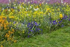 Kolorowy flowerbed w wiośnie z pansies, daffodils, tulipany Zdjęcie Stock