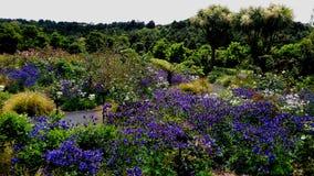 Kolorowy Flowerbed w wiosna sezonie przy ogródem botanicznym Auckland z różnymi kwiatami Fotografia Stock