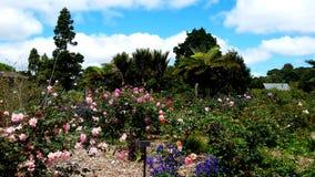 Kolorowy Flowerbed w wiosna sezonie przy ogródem botanicznym Auckland z różnymi kwiatami Obraz Royalty Free