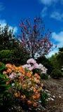 Kolorowy Flowerbed w wiosna sezonie przy ogródem botanicznym Auckland z różnymi kwiatami Obraz Stock