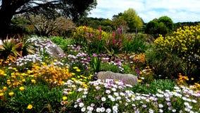 Kolorowy Flowerbed w wiosna sezonie przy ogródem botanicznym Auckland z różnymi kwiatami Zdjęcie Royalty Free