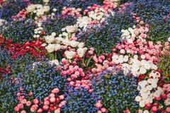 Kolorowy flowerbed z mieszanymi kwiatami Fotografia Stock
