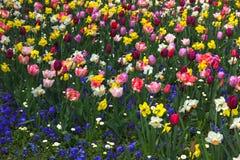 Kolorowy flowerbed z mieszanymi kwiatami Obrazy Royalty Free