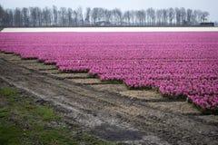 Kolorowy flowerbed z tulipanów daffodils i hiacyntami Obrazy Stock