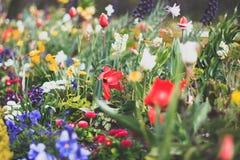 Kolorowy flowerbed z wiele różnymi wiosna kwiatami Obrazy Stock