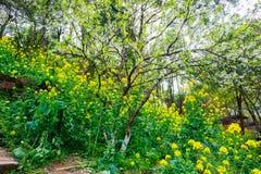 Kolorowy gwałta kwiatu pole Obrazy Stock