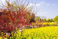 Kolorowy gwałta kwiatu pole Zdjęcia Royalty Free