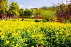 Kolorowy gwałta kwiatu pole Fotografia Royalty Free