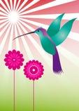 kolorowy hummingbird Fotografia Royalty Free