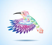 Kolorowy Hummingbird Zdjęcie Royalty Free