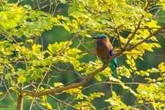 Kolorowy Indiański Rolkowy tyczenie na żerdzi zdjęcie royalty free