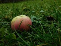 Kolorowy jabłczany rzutu puszek w trawę od niektóre drzewa Obraz Royalty Free