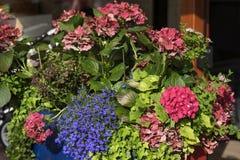 Kolorowy jaskrawy i żywy kwitnący lato lub wiosna kwitniemy na flowerbeds miasto Piękny sezonowy kwiecisty obrazy royalty free