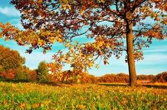 Kolorowy jesień krajobraz jesieni natura Jesieni natura w miękkim wieczór świetle Obraz Stock