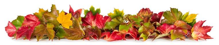Kolorowy jesień spadku stos liścia ulistnienia sezonowy pojęcie fotografia stock
