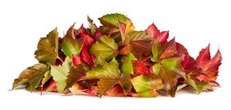Kolorowy jesień spadku stos liścia ulistnienia sezonowy pojęcie obrazy royalty free