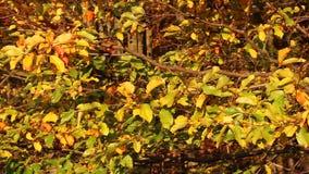 Kolorowy jesień urlop na gałąź zbiory