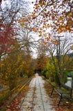 Kolorowy jesień chodniczek Zdjęcia Stock