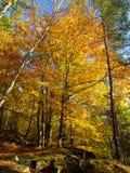 kolorowy jesień drzewo Obrazy Royalty Free