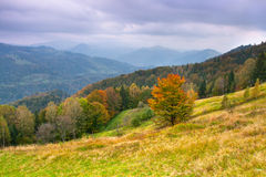 kolorowy jesień krajobraz Zdjęcie Stock