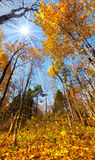 kolorowy jesień krajobraz Obrazy Royalty Free