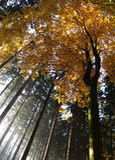 kolorowy jesień las Fotografia Stock
